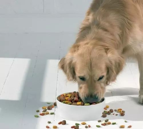 Pet snacks have a promising future