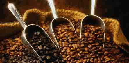 Analysis of the main components and functions of small seed coffee